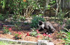 cat_roses